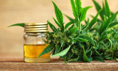 Health Benefits of Cannabidiol CBD