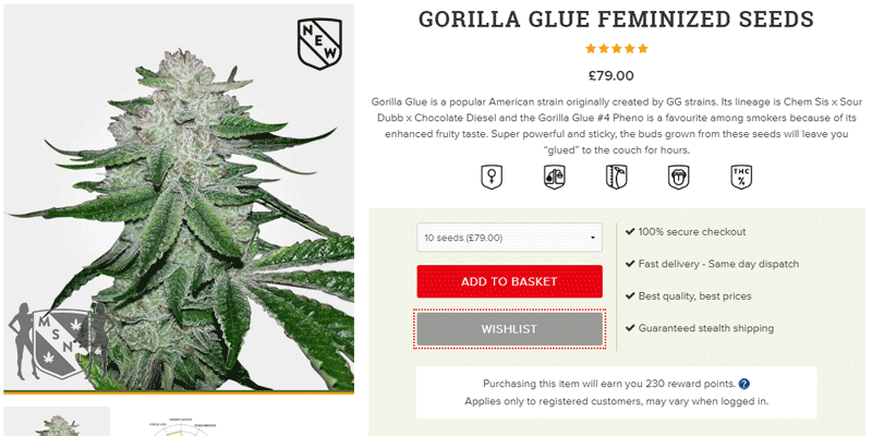 Buy-gorilla-glue-seeds