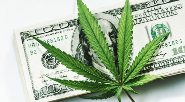 Cannabis Farming is Highly Profitable