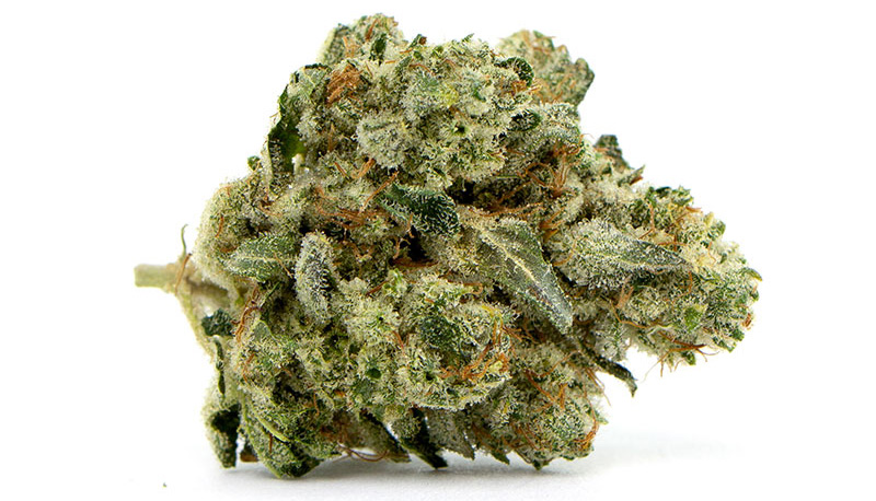Gorilla-Glue-#2-close-up