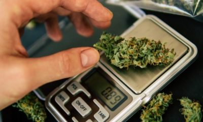 Weed Measurements A Complete Guide