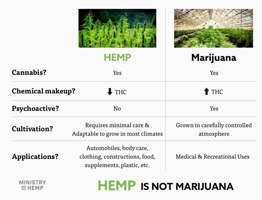 cannabis vs hemp chart