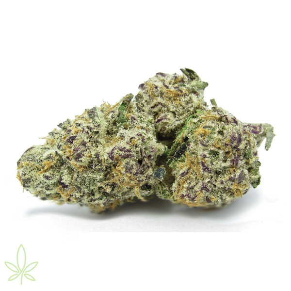 Purple punch strain bud