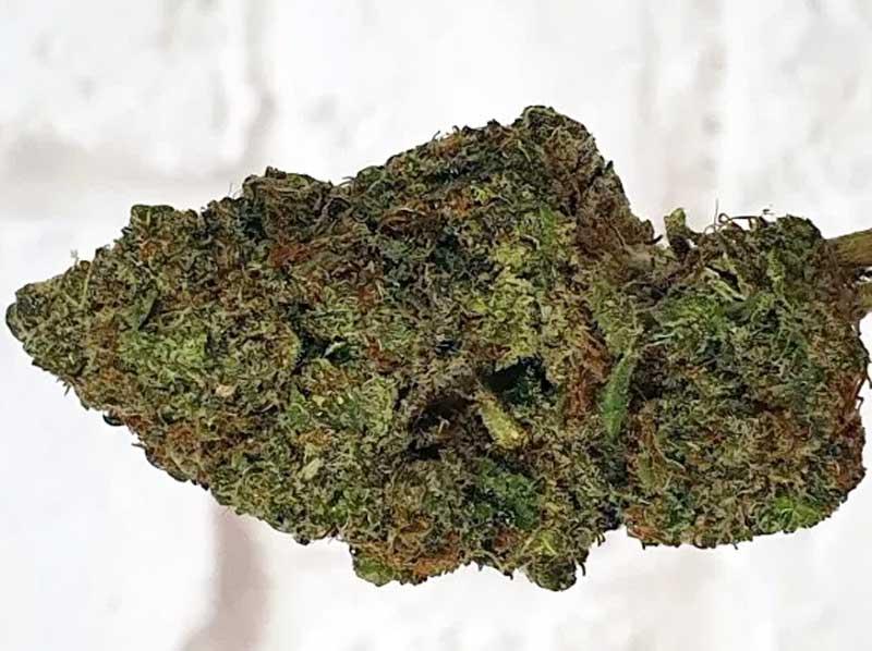 Orange-Slush-Cannabis-bud
