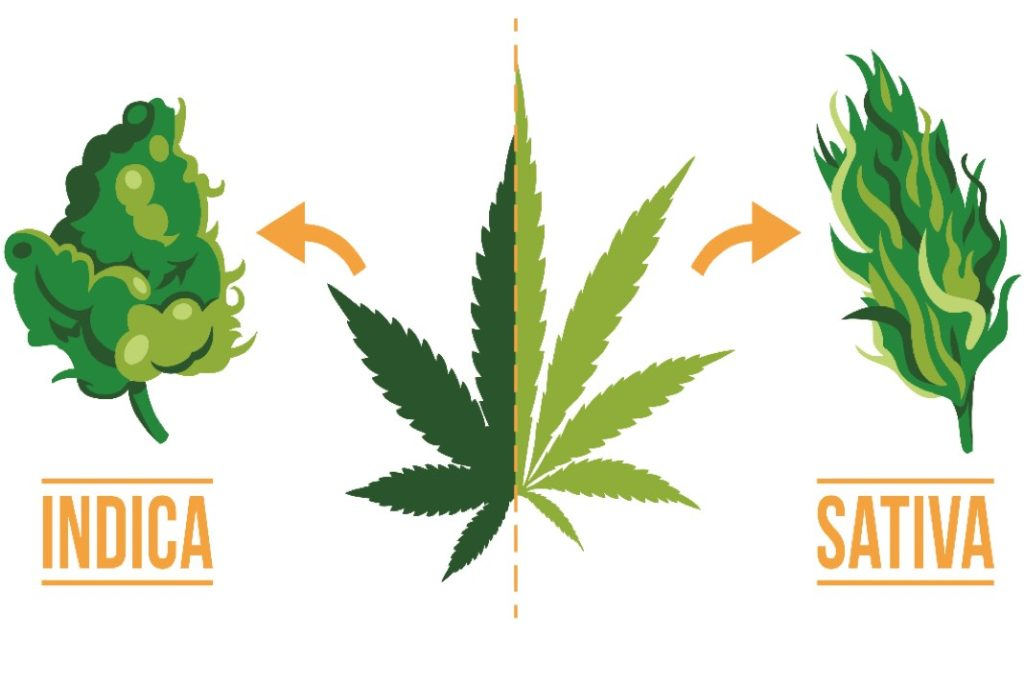 sativa indica difference
